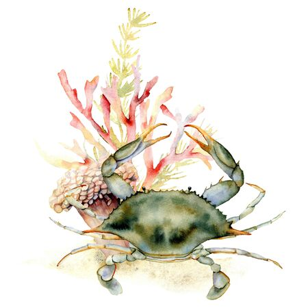Watercolor crab, coral and seaweed composition. Hand painted underwater illustration with laminaria and coral reef isolated on white background. Aquatic illustration for design, print or background. Stock Photo