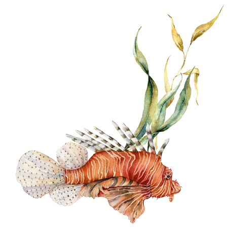 Watercolorv lionfish composition. Hand painted underwater illustration with laminaria and coral reef isolated on white background. Aquatic illustration for design, print or background.