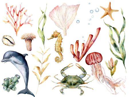 Aquarell Leben im Meer. Handgemaltes Korallenriff, Delphin, Krabben, Seepferdchen, Quallen, Seesterne und Laminaria isoliert auf weißem Hintergrund. Wassertierillustration für Design, Druck, Hintergrund.