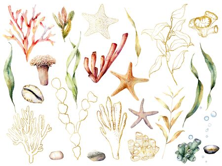 Watercolor floral underwater set. Hand painted coral reef plants with leaves and branches isolated on white background. Aquatic golden line art illustration for design, print or background. Stock Photo