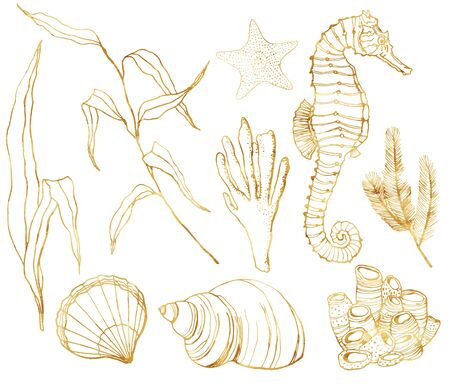 Vector line art underwater set. Hand painted watercolor seahorse, laminaria, corals and shells isolated on white background. Aquatic outline golden illustration for design, print or background. Illustration