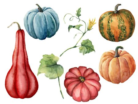 Watercolor set with pumpkins and leaves. Hand painted red, blue, orange and stripe pumpkins isolated on white background. Autumn festival. Botanical illustration for design, print or background. 写真素材