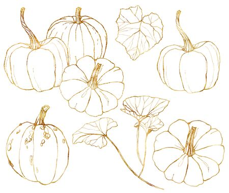 Vector golden pumpkins set for harvest festival. Hand painted traditional pumpkins with leaves and branches isolated on white background. Botanical line art illustration for design, print, background.