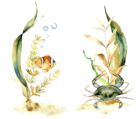 Watercolor compositions with tropical fish and crab. Hand painted underwater floral illustration with algae and air buble isolated on white background. For design, fabric or background. Stock Photo