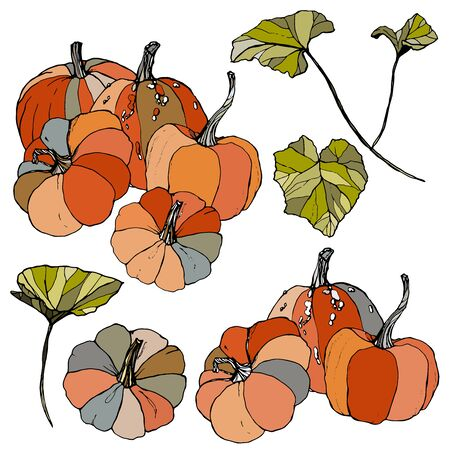 Vector set with gourds and leaves. Hand painted red, blue, orange and stripe pumpkins isolated on white background. Autumn festival. Botanical illustration for design, print or background