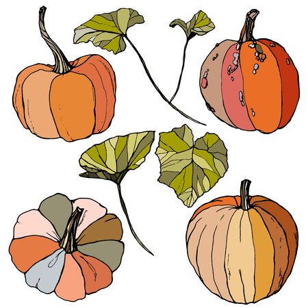 Vector set with leaves and pumpkins. Hand painted red, blue, orange and stripe gourds isolated on white background. Autumn festival. Botanical illustration for design, print or background