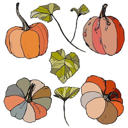 Vector set with leaves and gourds. Hand painted red, blue, orange and stripe pumpkins isolated on white background. Autumn festival. Botanical illustration for design, print or background