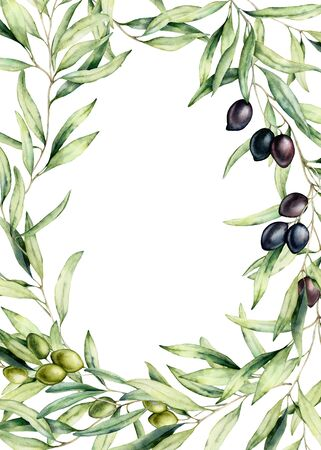 border with black and green olive berries and branch. Hand painted botanical card with olives isolated on white background. Floral illustration for design, print, fabric or background.