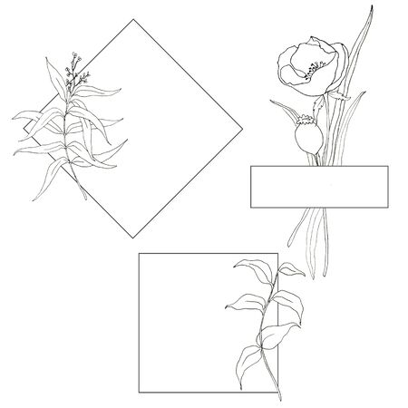 Line art simple templates with flowers and greenery. Hand painted borders with eucalyptus leaves, anemones, tulips and greenery leaves and branches isolated on white background. Floral illustrations Фото со стока
