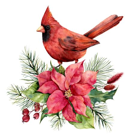 Watercolor Christmas card with cardinal, poinsettia and floral decor. Hand painted bird, traditional flower and fir branch isolated on white background. Holiday print for design, print or background. Stock Photo
