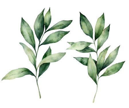Watercolor seeded eucalyptus set. Hand painted eucalyptus branch and leaves isolated on white background. Floral illustration for design, print, fabric or background. Botanical set. Stockfoto
