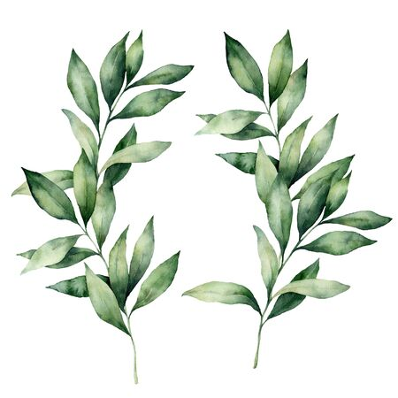 Watercolor eucalyptus branches set. Hand painted eucalyptus thick branch and leaves isolated on white background. Floral illustration for design, print, fabric or background. Botanical set.