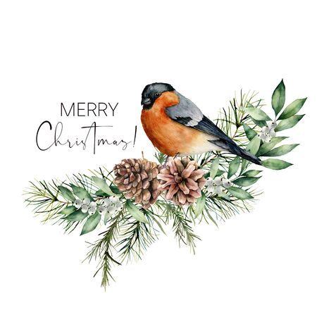 Watercolor Christmas card with bullfinch and floral decor. Hand painted bird, pine cones, fir and eucalyptus branches isolated on white background. Holiday print for design, print or background.