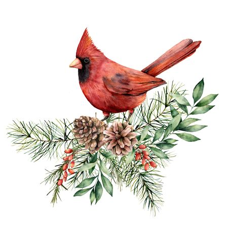 Watercolor Christmas card with cardinal and floral decor. Hand painted bird, pine cones, fir and eucalyptus branches isolated on white background. Holiday print for design, print or background.