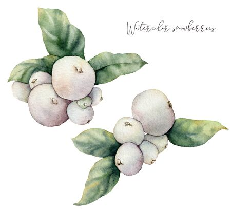 Watercolor snowberry set. Hand painted winter plants with leaves and berries isolated on white background. Floral illustration for design, print, fabric or background. Botanical set.