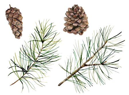 Watercolor botanical set with pine cones and branches. Hand painted winter holiday plants isolated on white background. Floral illustration for design, print, fabric or background.