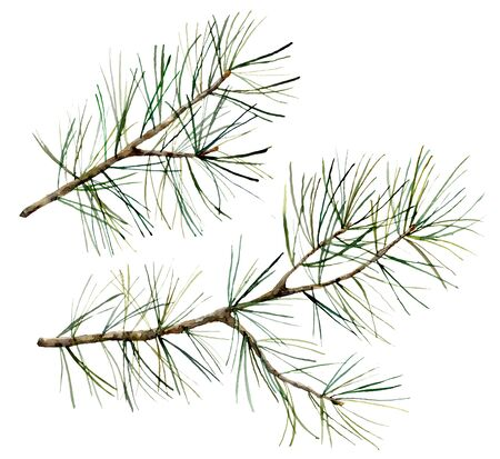 Watercolor botanical set with pine branches. Hand painted winter holiday plants isolated on white background. Floral illustration for design, print, fabric or background. Zdjęcie Seryjne