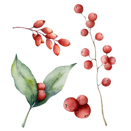 Watercolor red berries set. Hand painted winter plants with leaves, branches and berries isolated on white background. Floral illustration for design, print, fabric or background. Botanical set.