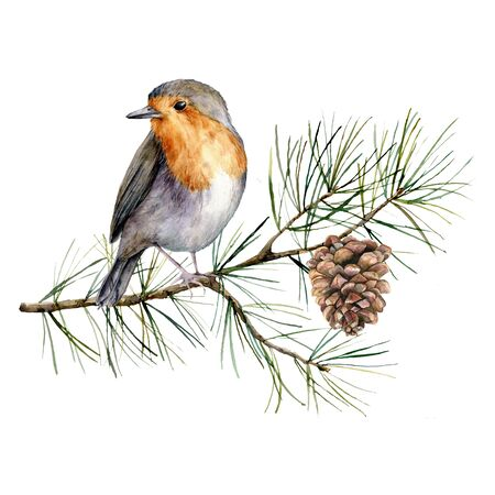 Watercolor Christmas composition with robin. Hand painted winter card with bird, fir branch and cone isolated on white background. Floral illustration for design, print, fabric or background. Stockfoto