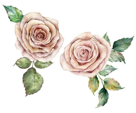 Watercolor pink roses and leaves card. Hand painted floral composition with flowers and leaves isolated on white background. Botanical vintage illustration for design, print or background