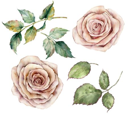 Watercolor pink roses and leaves set. Hand painted floral vintage flowers with leaves isolated on white background. Botanical illustration for design, print or background
