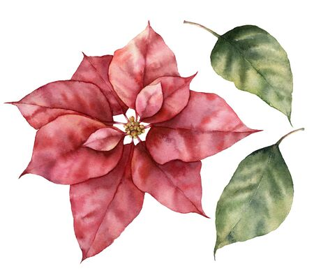 Watercolor Christmas set with poinsettia and leaves. Hand painted holiday plant with flower isolated on white background. Winter botanical illustration for design, print or background.