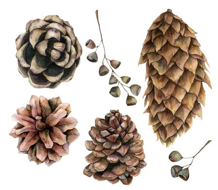 Watercolor botanical set with pine cones and seeds. Hand painted winter holiday plants isolated on white background. Floral illustration for design, print, fabric or background