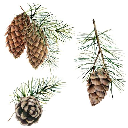 Watercolor botanical set with pine cones, needles and branches. Hand painted winter holiday plants isolated on white background. Floral illustration for design, print, fabric or background