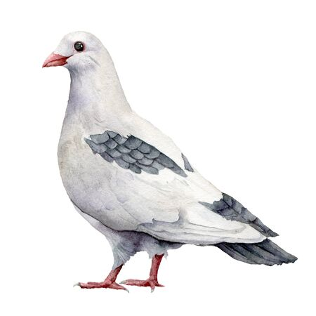 Watercolor card with a white dove. Hand painted greeting postcard with pigeon bird isolated on white background. Easter illustration for design, print, fabric or background. Spring bird.