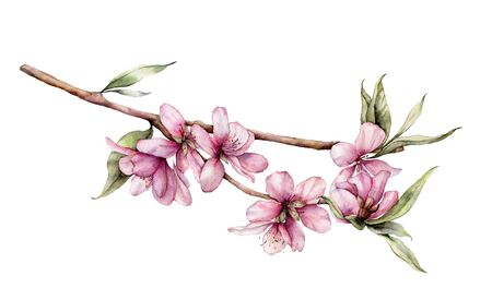 Watercolor cherry blossom. Hand painted flowers, leaves and branch isolated on white background. Floral spring illustration for design, print, fabric or background