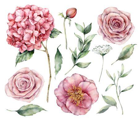 Aquarellblumen eingestellt. Handgemalte Vintage-Blumen, rosa Rosen, Hortensien und Eukalyptusblätter isoliert auf weißem Hintergrund. Botanische Illustration für Design, Druck, Stoff oder Hintergrund.