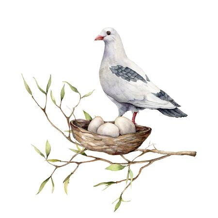 Watercolor card with a dove and a nest. Hand-painted spring nest with pigeon, eggs and branch isolated on a white background. Holiday wildlife illustration for design, print or background.