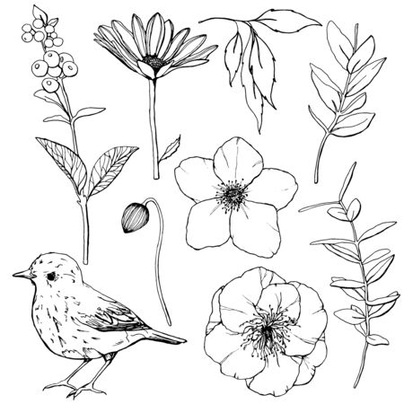 Vector Easter set with flowers, bird and berries. Hand painted line art anemones, buds and leaves isolated on white background. Botanical spring illustration for design, print or background.