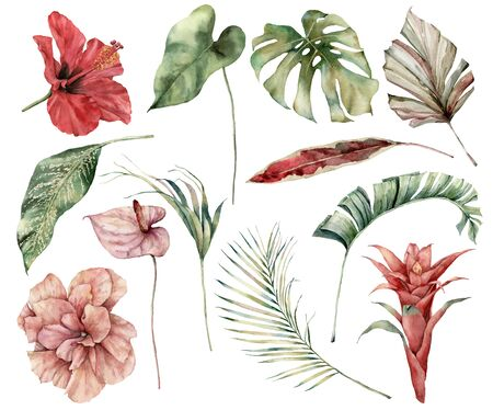 Watercolor tropical set with flowers and leaves. Hand painted hibiscus, monstera, anthurium, guzmania and palm twigs isolated on white background. Floral illustration for design, print, background.