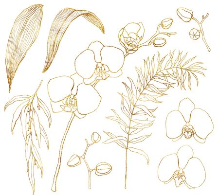 Set of watercolor line art orchids. Hand painted tropical golden flowers, eucalyptus branches and leaves isolated on white background. Minimalistic floral illustration for design, print or background Banque d'images - 144177814