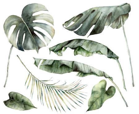 Watercolor tropical set with banana, palm and monstera leaves. Hand painted branches and twigs isolated on white background. Floral jungle illustration for design, print or background