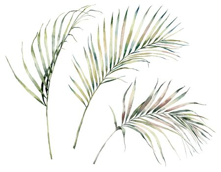 Watercolor tropical set with palm leaves. Hand painted exotic leaves and branches isolated on white background. Floral illustration for design, print, fabric or background