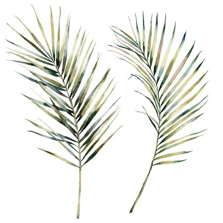 Watercolor tropical set with palm branches. Hand painted exotic leaves isolated on white background. Floral illustration for design, print, fabric or background