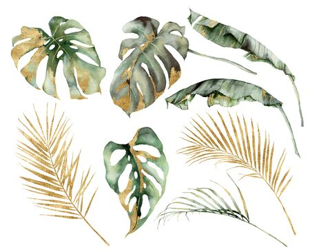 Watercolor tropical set with banana, palm and monstera golden leaves. Hand painted branches and twigs isolated on white background. Floral jungle illustration for design, print or background.