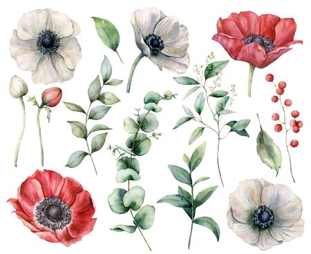 Watercolor floral set with red and white anemones. Hand painted flowers, buds, berries and eucalyptus leaves isolated on white background. Spring illustration for design, print, fabric or background.