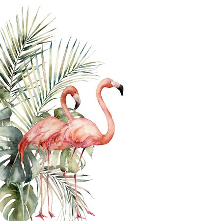 Watercolor tropical card with pair of pink flamingos and palm leaves. Hand drawn coconut and monstera leaves frame. Floral illustration isolated on white background for design, print or background.