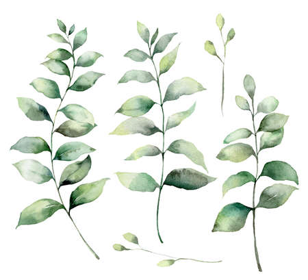Set of watercolor eucalyptus branches. Hand painted eucalyptus thick branches and leaves isolated on a white background. Flower illustration for design, print, fabric, or background. Botanical set. Archivio Fotografico