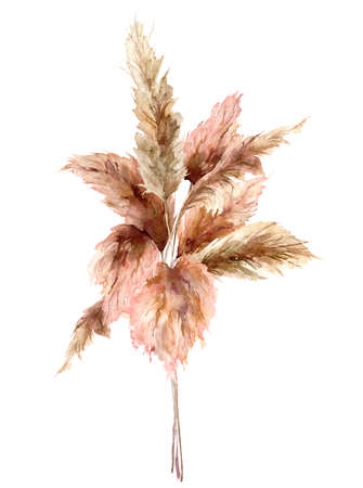Watercolor tropical bouquet with dry pampas grass. Hand painted exotic card isolated on white background. Floral illustration for design, print, fabric or background.
