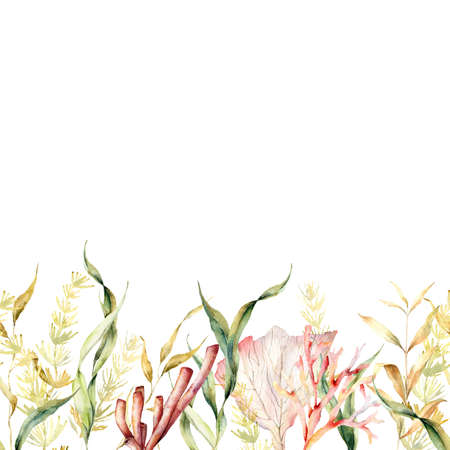 Watercolor tropical seamless border with kelp and laminaria. Hand painted underwater illustration with algae leaves and coral reef plants isolated on white background. For design, fabric or print. 免版税图像