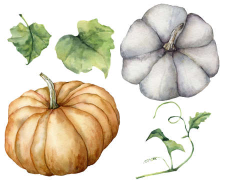 Watercolor autumn set with orange and blue pumpkins and leaves. Hand painted gourds isolated on white background. Autumn harvest festival. Botanical illustration for design, print or background. 免版税图像