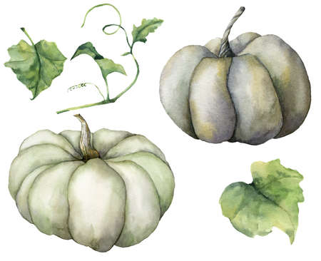 Watercolor autumn set with pumpkins and leaves. Hand painted gray and blue gourds isolated on white background. Autumn harvest festival. Botanical illustration for design, print or background. 免版税图像