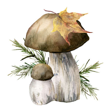 Watercolor autumn card with mushrooms, leaf and needles. Hand painted boletus isolated on white background. Botanical forest illustration for design, print or background.