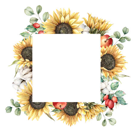Watercolor autumn frame with sunflowers, eucalyptus branches, cotton and berries. Hand painted rustic card isolated on white background. Floral illustration for design, print, fabric or background. 免版税图像