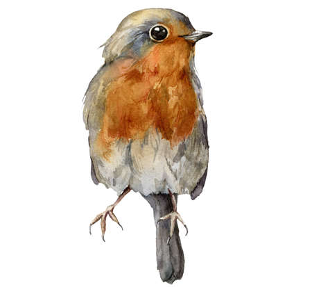 Watercolor card with robin redbreast. Hand painted bird isolated on white background. Wildlife illustration for design, print, fabric or background. 免版税图像