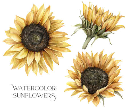 Watercolor autumn set with sunflowers and leaves. Hand painted rustic card isolated on white background. Floral illustration for design, print, fabric or background.